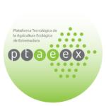 Ptaeex